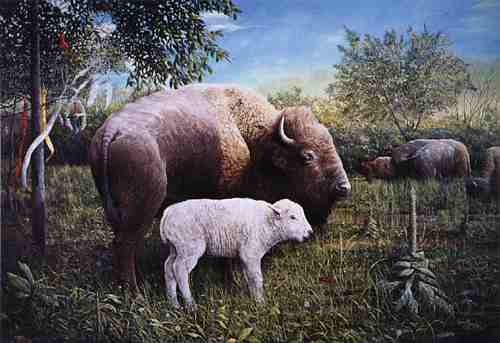 The Birth Of A White Buffalo Calf Is An Omen Of Universal Significance
